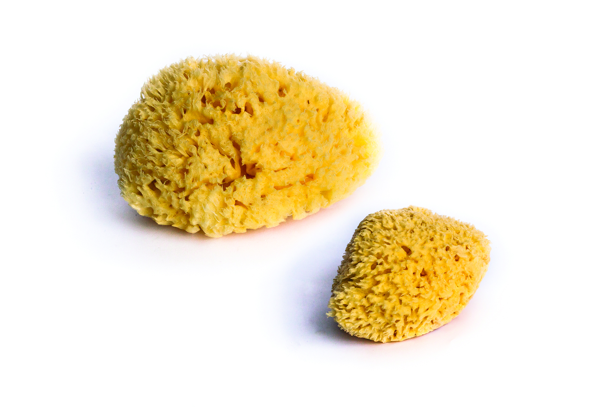 LOT OF 2 NATURAL SPONGES